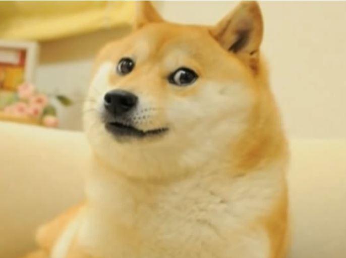 「神煩狗」Doge從2013年開始出現在網路各處,因為牠超跩的臉部表情與姿勢立刻竄紅。(擷取自推特)