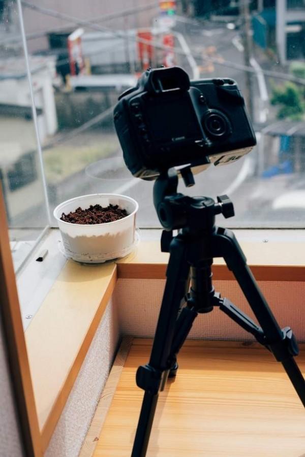 眾多網友紛紛上傳自己的沙拉菜,其中有人已經架好攝影機,等著記錄沙拉菜的成長過程。(圖擷取自西槇太一推特)