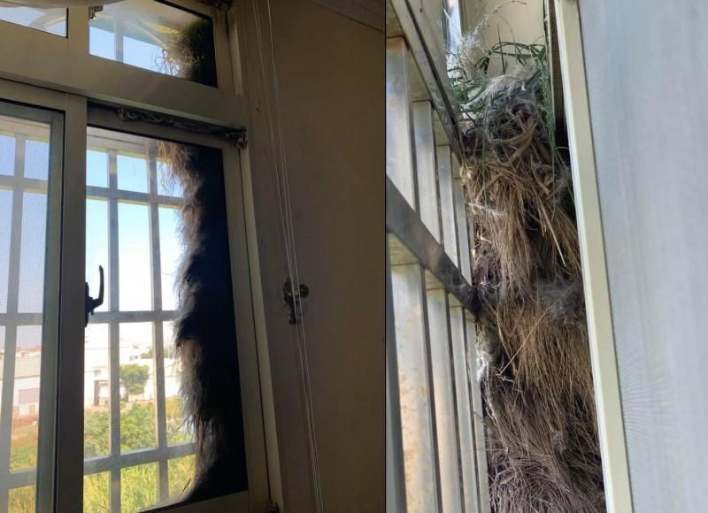 一名女網友自家窗外建滿鳥巢,猶如「鳥公寓」。(圖擷取自爆廢公社)
