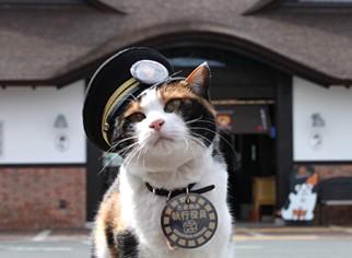 和歌山縣民營鐵路玳瑁貓「小玉站長」日前病逝,日本媒體高度關注。(圖擷自「和歌山是觀光協會官方網站」)