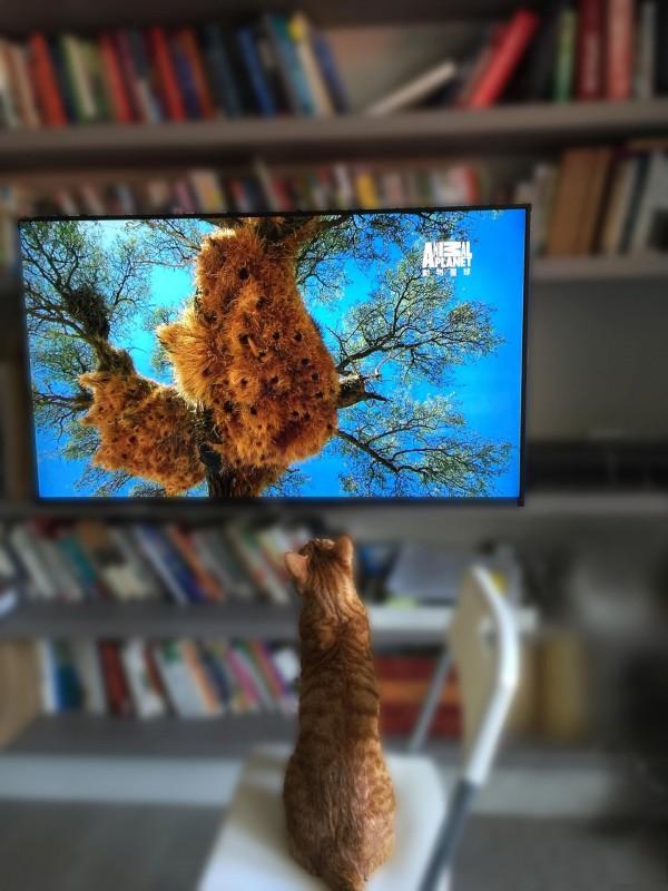 蔡英文總統分享「蔡阿才」盯著電視看的畫面,看來蔡總統已經學會模糊背景的技巧。(圖擷自臉書)