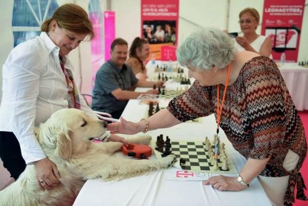 匈牙利87歲的阿嬤辛卡(Brigitta Sinka)相當熱愛西洋棋。(圖擷取自japan times)