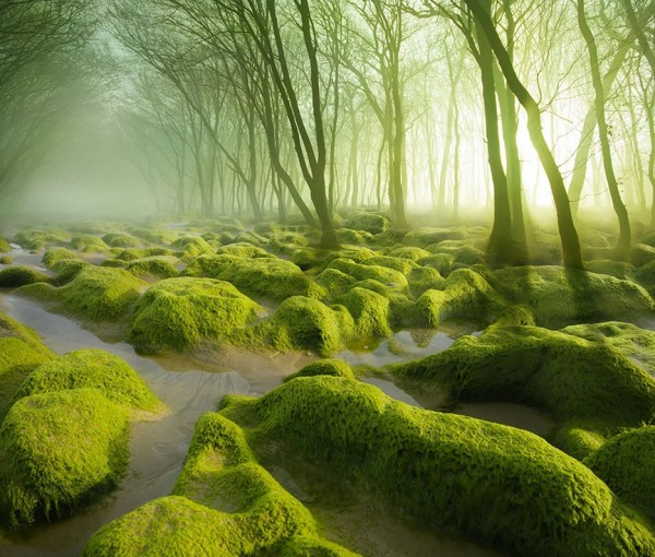 第一名羅馬尼亞的苔癬沼澤。(圖擷取自BoredPanda)
