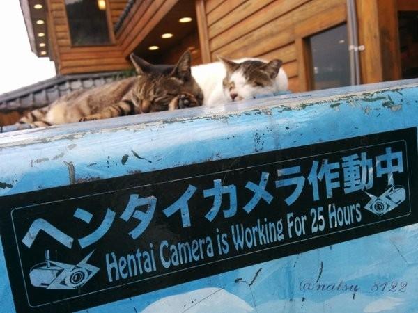 日本網友在我國著名的觀光景點九份某處的藍色變電箱上,意外發現貼有「ヘンタイカメラ作動中」的日文貼紙。(圖擷取自推特)