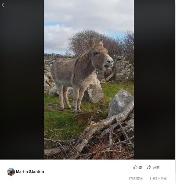 愛爾蘭有隻名叫哈莉特(Harriet)的母驢,近日被人錄下牠驚為天人的好「歌聲」,上傳網路後引發熱議,有網友讚稱牠宛如歌劇女伶。(翻攝自臉書社團「Ireland from the Roadside」)