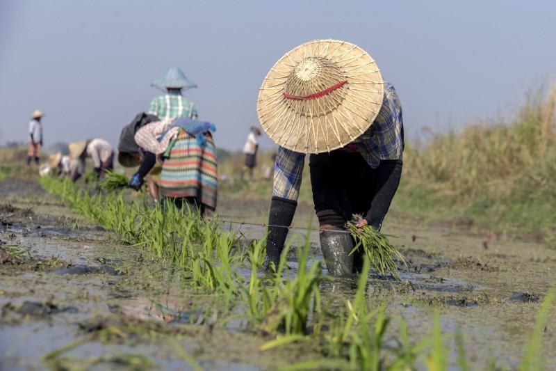 聯合國公布資料表示,2018年北韓糧食不足創十多年來最低。(歐新社)