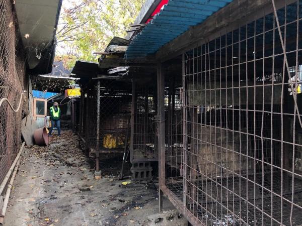 南韓數百隻逃過成為盤中飧命運的狗,竟遭收容組織的負責人秘密撲殺,以確保獲得源源不斷的捐款。圖為南韓被關閉的肉狗飼養繁殖場。(法新社)