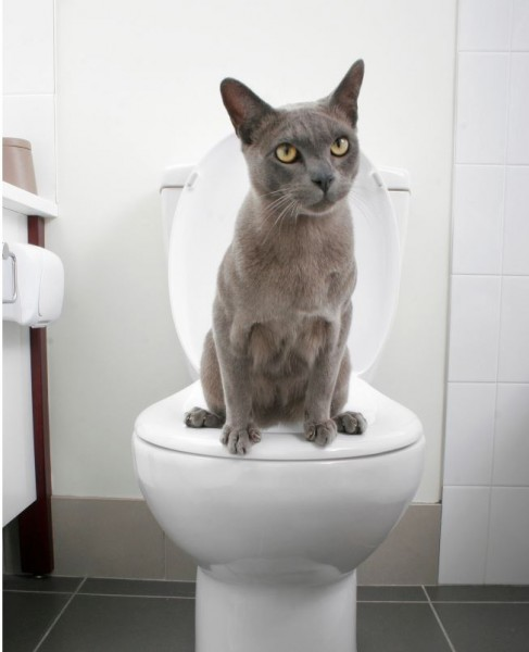 讓貓咪坐著上廁所該如何訓練,是許多飼主共同的問題,英國最近有項發明,宣稱能輕鬆教導貓咪如何上廁所。(圖擷取自METRO)