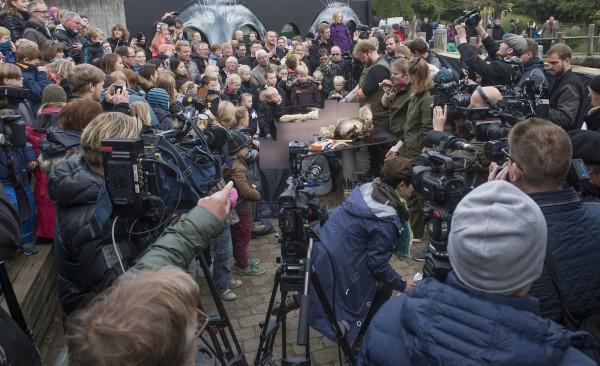 歐登斯動物園日前表示,將於15日公開解剖此前已遭安樂死的幼獅,雖引發國際一片譁然,園方今仍如期舉行解剖活動。(法新社)
