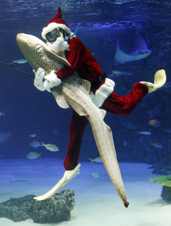 日本有人打扮成耶誕老人潛水,抱著1隻鯊魚。(歐新社)