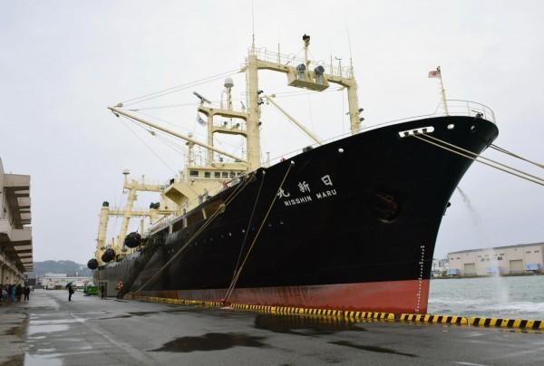 日本捕鯨船隊日前不顧國際反對團體批評,繼續南極的捕鯨行動,最近捕獲了300多頭小鬚鯨。(美聯社資料照)