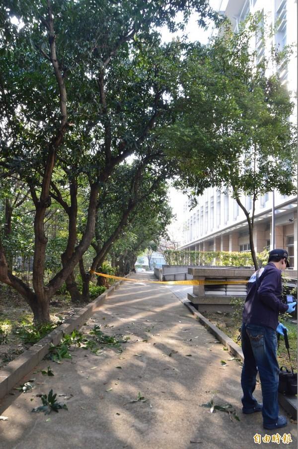林姓學生跌落處,距離圖書館後方約10公尺。(記者張瑞楨攝)