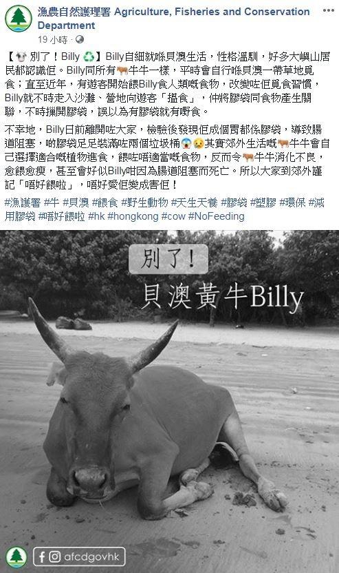 Billy日前喪命,死後被發現肚子裡的塑膠,量大到足以裝滿兩個垃圾桶。(圖擷取自香港漁農自然護理署臉書粉專)
