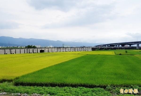 宜蘭縣不少農田並非農用,代理縣長陳金德上任第一週,卻考慮研議公告地價不區分農建地。(記者簡惠茹攝)