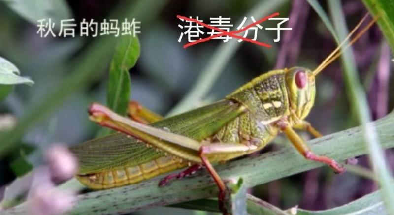 中共解放軍東部戰區陸軍的微信公眾號的文章中配上一張蝗蟲圖片,上面有「秋後的螞蚱」以及被打上X的「港毒分子」等文字,文章又指蝗蟲「在秋天會逐漸絕跡」。(圖取自中國網站)