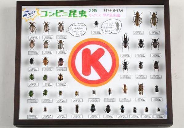 日本研究發現,昆蟲也有偏愛的便利商店,最喜歡去「OK」。(圖擷取自《withnews》)