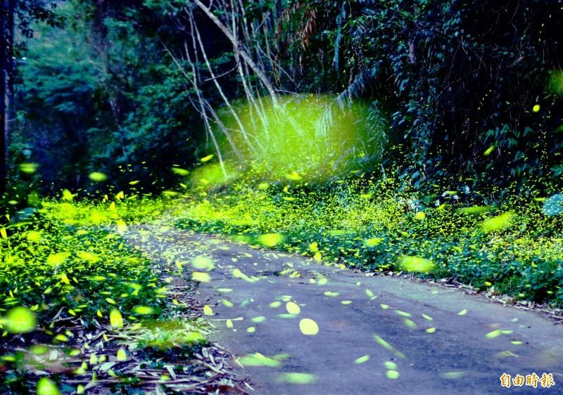 螢火蟲季到來,許多攝影者爭相拍攝美景。(資料照)