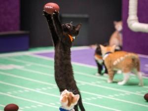 小貓搶球的畫面。(圖片擷取自美國廣播公司新聞網(ABC News)網站)