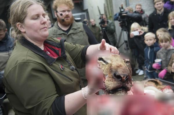 除了有不同組織進行譴責或發起請願,許多來自不同的動保組織也基於動物權利的角度發出抗議,不過園方及部分丹麥人仍堅持此舉是為了教育。(法新社)