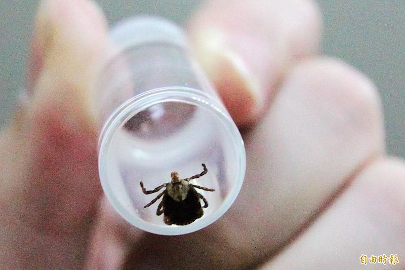 美國9歲男童一直聽到嗡嗡聲,醫生看診時當場嚇呆,原來小男孩的耳膜裡竟然嵌進1隻蜱蟲。蜱蟲示意圖。(資料照)
