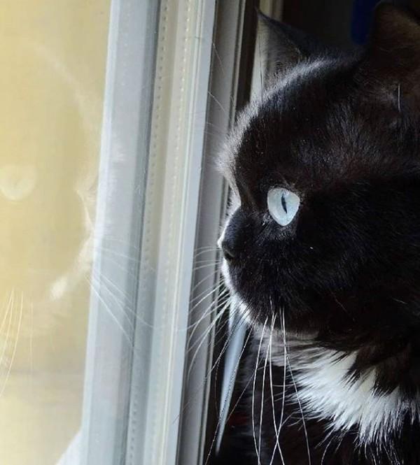 如果從Narnia的左邊看過去,你會以為牠是隻黑貓。(圖擷自IG)