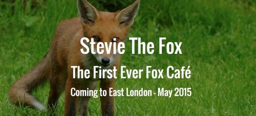 倫敦5月將推出短期咖啡廳「Stevie the Fox」,可近距離與狐狸相處。(圖擷取自Now. Here. This.)