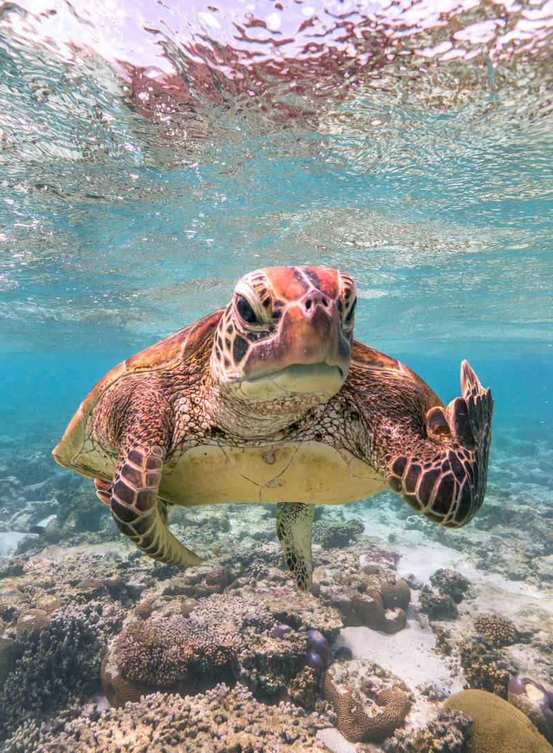 入圍決選名單照片「Terry the Turtle flipping the bird」。(© Mark Fitzpatrick / Comedy Wildlife Photo Awards 2020)