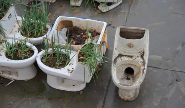 「菜園」主人平時就直接使用廁所糞便做為蔬菜的肥料。(圖擷取自網易新聞網)