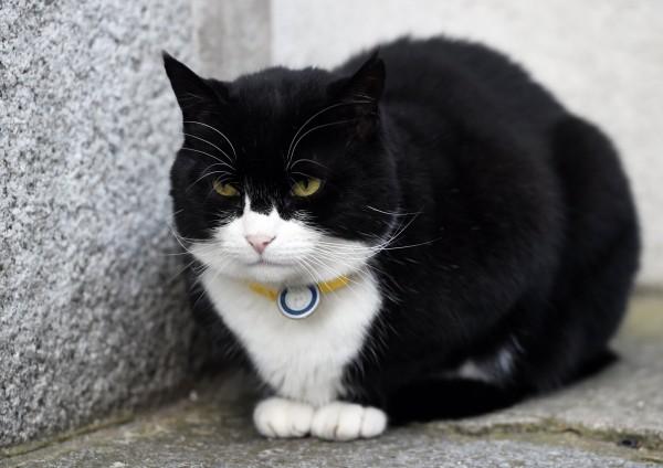 《泰晤士報》指出,巴麥尊的表現「輕鬆擊敗」了首相官邸的捕鼠官賴瑞。(路透)