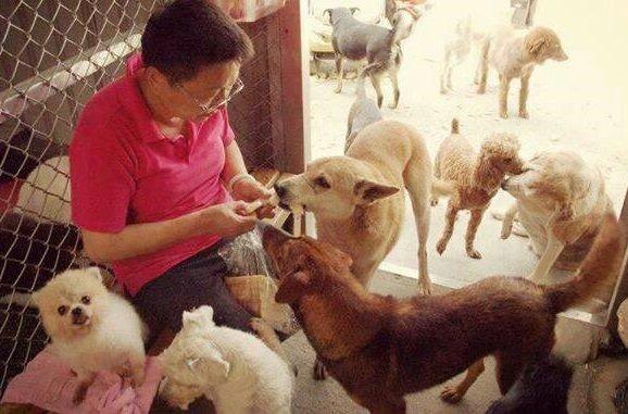張媽媽因不忍被遺棄的貓狗流浪街頭,10多年來不辭辛勞收容這些可憐動物。(圖擷自張媽媽流浪動物之家臉書)