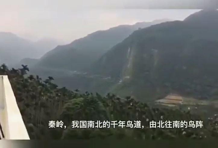 「萬鷺朝鳳」拍攝地點在台灣嘉義太興村,竟被移花接木成中國「秦嶺雁行」。(黃蜀婷提供,擷自網路)