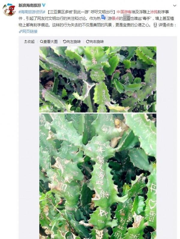 中國海南省三亞市風景區的花草也沒被放過。(圖擷自微博)