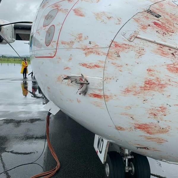 還有羽毛卡在機身上。(圖取自Aviation Tanzania臉書專頁)