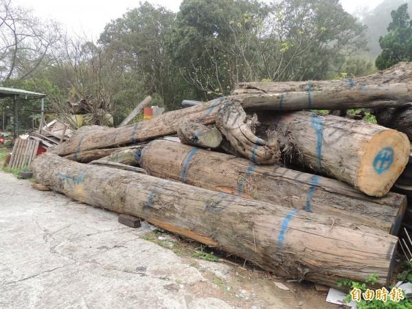 引起軒然大波的漂流木,在苗栗縣三義鄉現蹤。(記者蔡政珉攝)