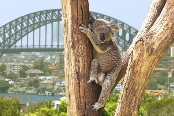 澳洲雪梨(Sydney)。(圖擷自BuzzFeed)