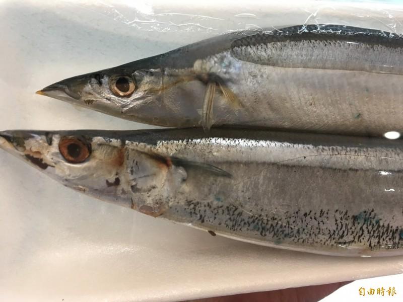 日本近年秋刀魚漁獲量銳減,因此昨日在北太平洋漁業委員會會議上,提案設立捕撈額度,可能將限制台灣的秋刀魚漁獲量。(資料照)