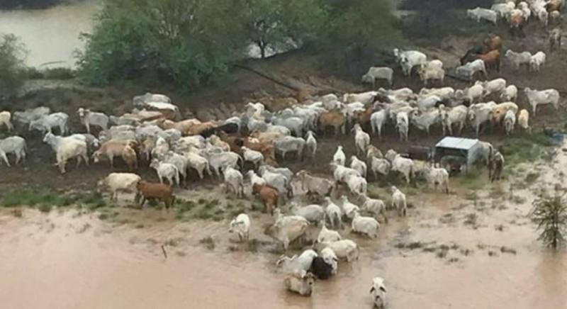 中國被爆發生牛瘟疫情,官方農業部尚未對此出具說法。牛隻示意圖。(路透)