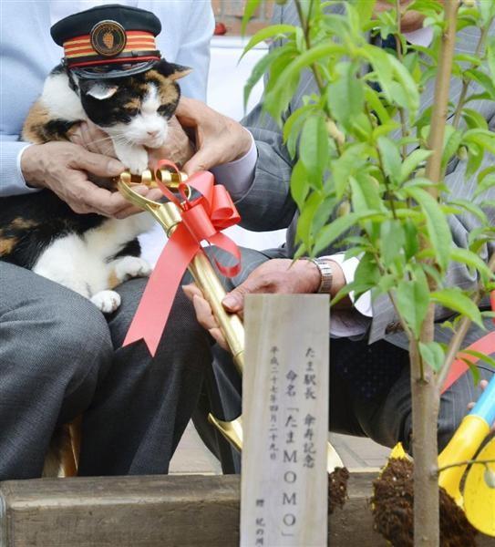 小玉站長是日本民營鐵路的第一個動物站長。(圖擷自《產經新聞》)