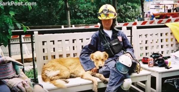 布列塔尼除了當搜救犬外,也療癒了當時許多人受創的心靈。(圖擷自YouTube)