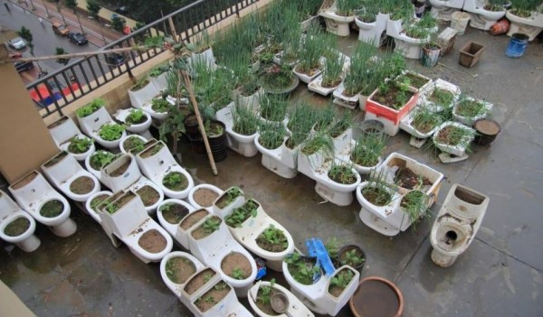 山東省菏澤市中央公館社區一棟大廈頂樓綠意盎然,有居民擺放數十個廢棄馬桶,種植各式各樣的蔬菜。(圖擷取自網易新聞網)