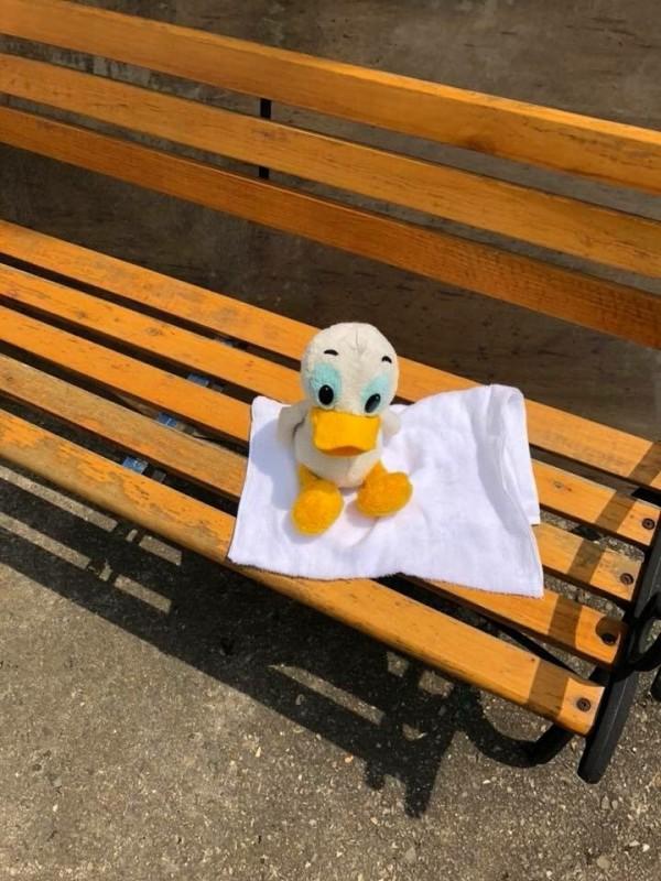 博物館把洗乾淨的唐老鴨放在太陽下晾乾。(圖擷自推特)