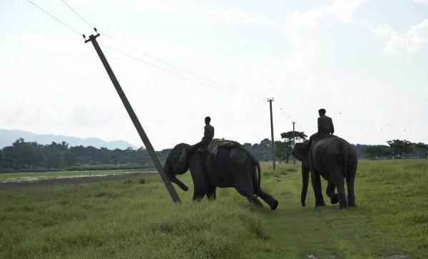 印度當局把大象當成「挖土機」,拆除位於卡濟蘭加國家公園附近的3村落。圖中大象正在推倒電線杆。(美聯社)