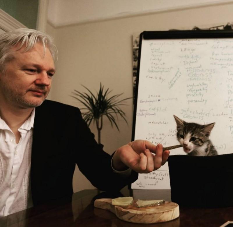亞桑傑和他的「使館貓」。(圖擷取自embassycat@IG)