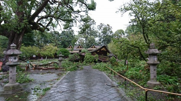 平野神社倒塌。(圖擷取自平野神社官方Twitter)