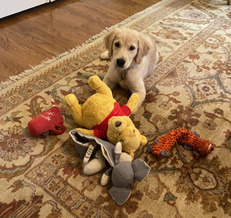 龐皮歐15日在社群媒體上PO出一張愛犬與玩具的照片,最醒目的玩具恰好是一隻小熊維尼,引發許多網友聯想。(圖擷取自龐皮歐推特)