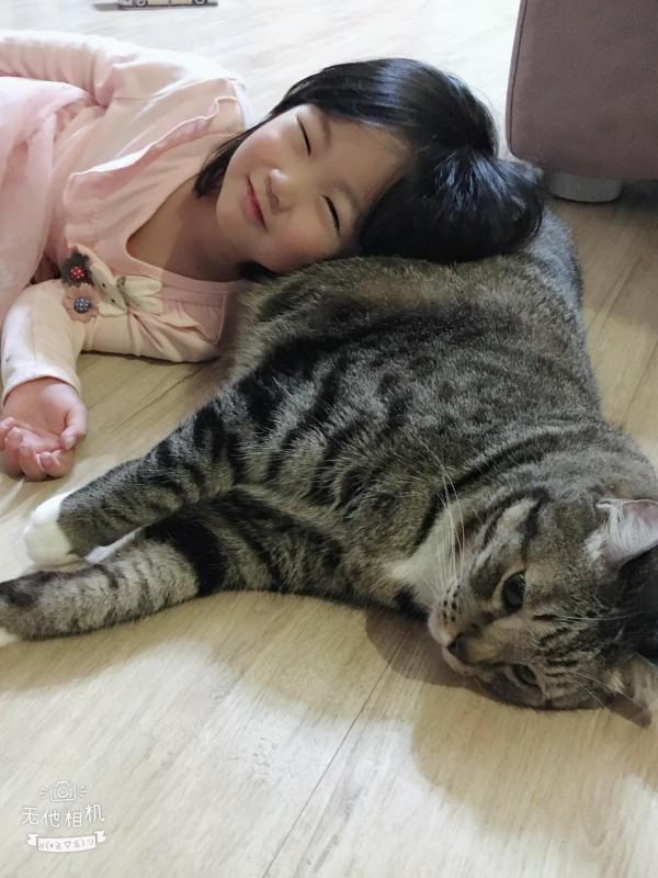 小女孩喜歡枕著貓咪的肚子撒嬌,與貓咪互動良好。(民眾提供)
