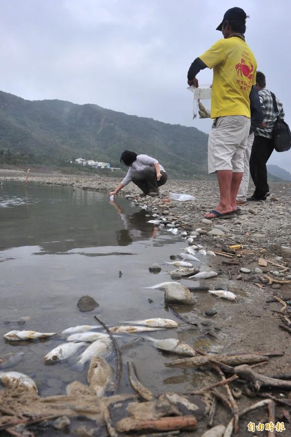 滿州港口溪浮現數百隻死魚,墾管處到場採樣。(記者蔡宗憲攝)