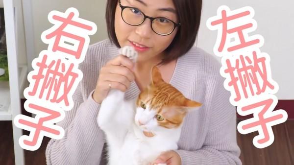 你知道貓咪也有分左右撇子貓?而且是「男左女右」?(圖片由好味小姐 Lady Flavor授權使用,以下圖片皆同)