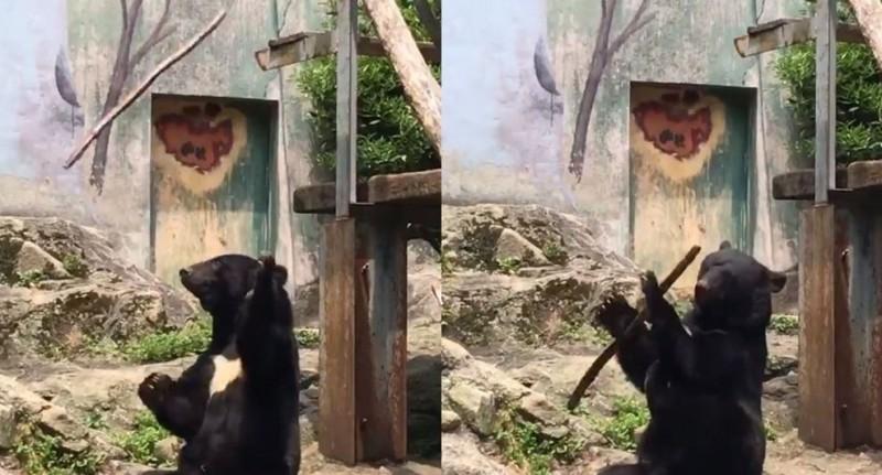 黑熊在動物園裡耍木棍,讓民眾相當驚奇。(圖擷取自推特)