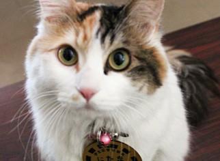 小玉站長的代理貓「二代玉」。(圖擷自「和歌山是觀光協會官方網站」)